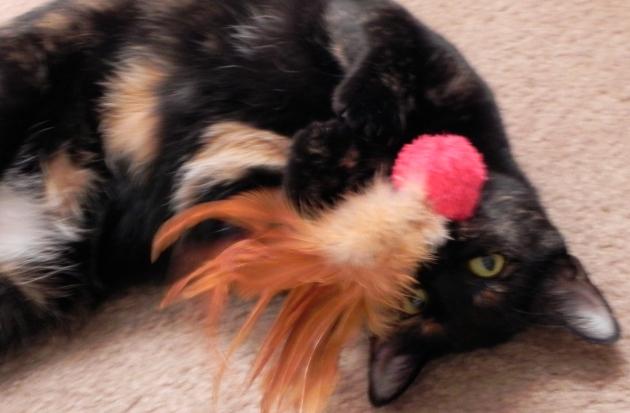 Sheba the kitty