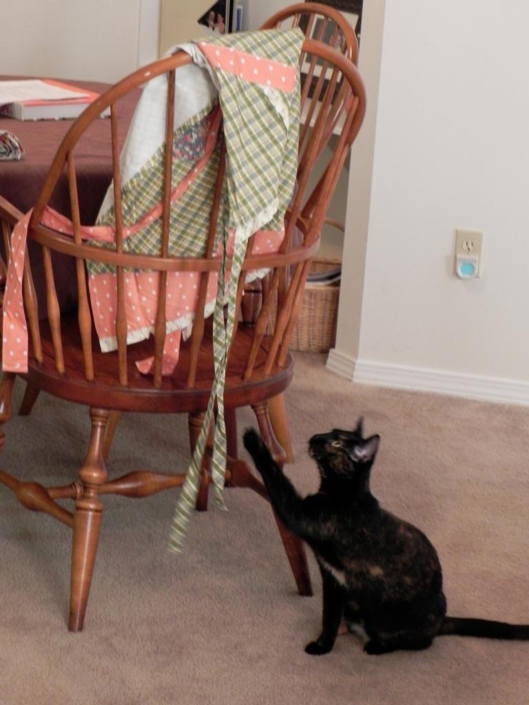Sheba pulling on my apron strings.